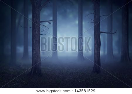 Forest With Lots Of Trees And Fog