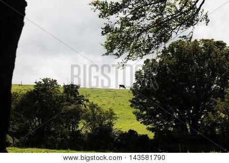 Landscape in Antrim co. in Northern Ireland