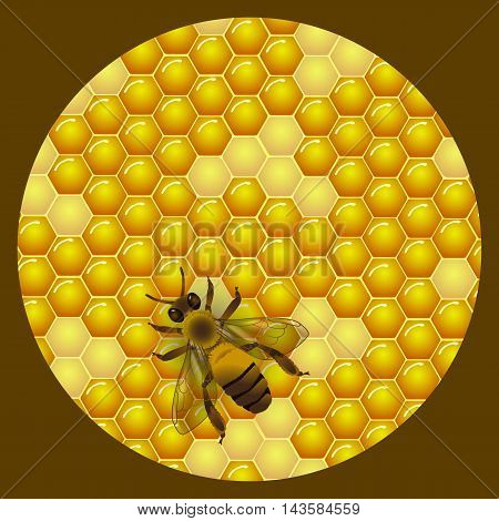 Vector honey round label design. Honeycombs texture background. Bee on honeycomb background. Template for honey package tag or wrapping.