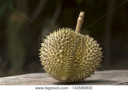 Image of one  Durian fruit  from Thailand