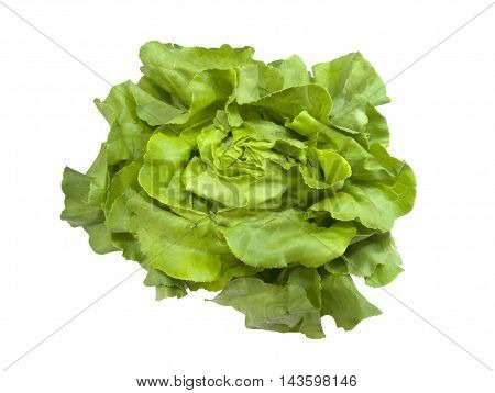 Head of fresh Boston Lettuce on a white background
