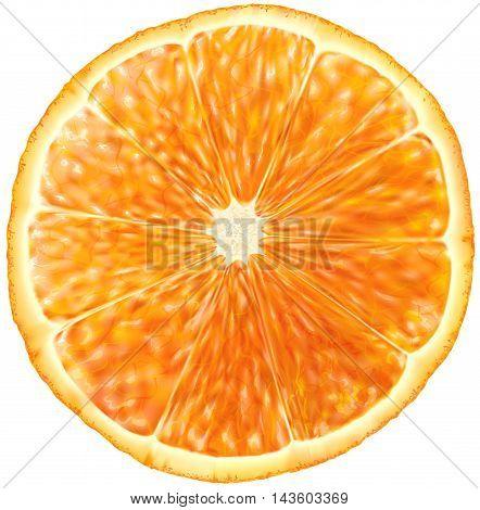 slice of orange fruit on white. Vector illustration
