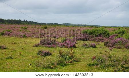 A view of the New Forest, United Kingdom