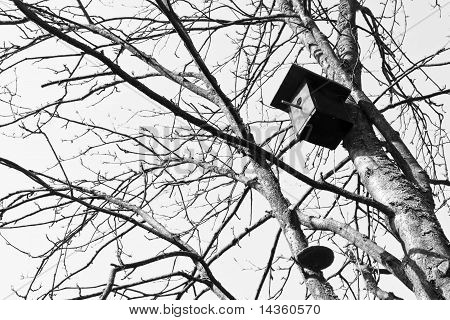Birdhouse on a tree