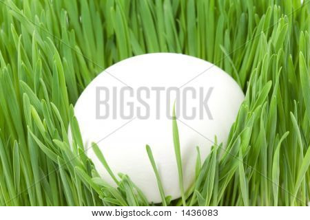White Egg In The Grass
