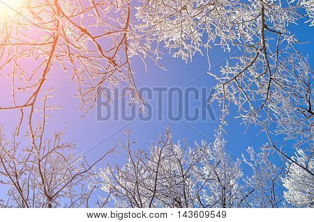 Winter nature. Winter frosty tree tops. Winter background - frosty branches of the winter trees against blue sky. Winter landscape with winter trees.