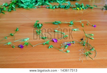 bouquet of wild flowers on the table blooming geranium forest succession