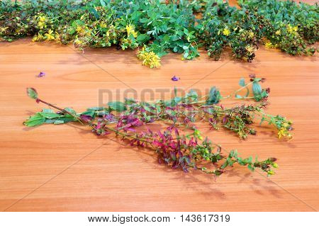 bouquet of wild flowers on the table flowering multicolor succession