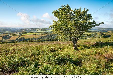 Dunkery Hill On Exmoor