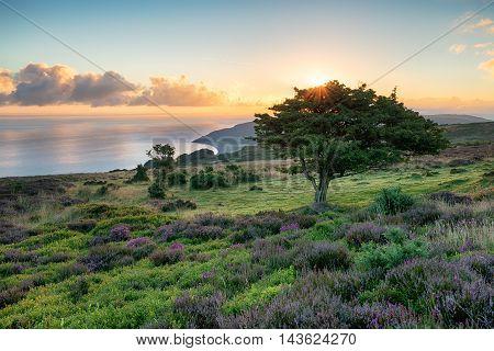 Exmoor Sunrise