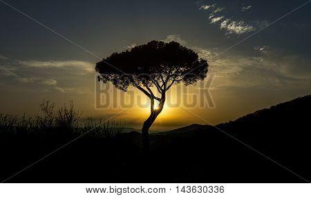 Puesta de sol sobre encina en ladera de montaña