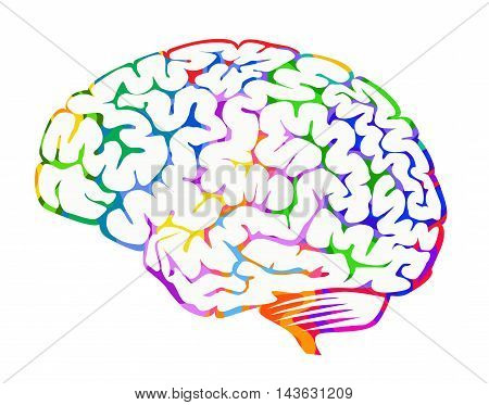 Brain with colourful patterns illustrating brainwaves and brain activity isolated on a white background.