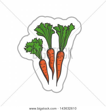 Carrot illustration. Carrot EPS10. Carrot colored. Carrot flat. Carrot art. Carrot label. Carrot simple.