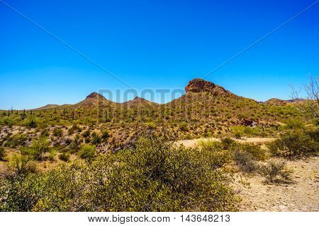 Desert Landscape of Tonto National Forest along the Apache Trail in Arizona, USA