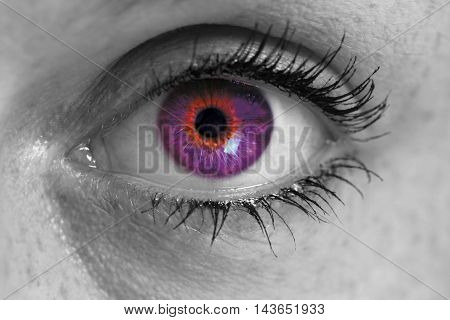 Eye with purple iris looks at viewer concept macro.