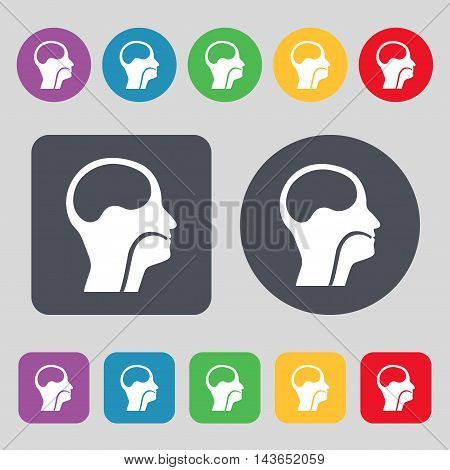 Larynx, Medical Doctors Otolaryngology Icon Sign. A Set Of 12 Colored Buttons. Flat Design. Vector