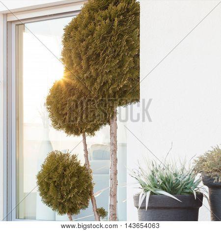 Extraordinary Tree In Yard