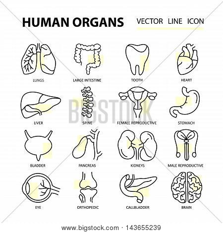 Set modern thin line web icons on medicine human internal organs. Premium quality vector logos.