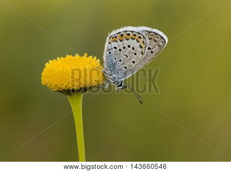 Natural life on plants a beautiful butterfly