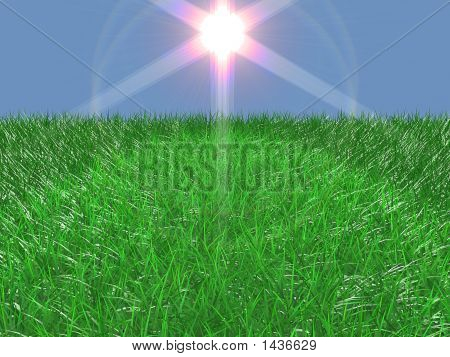 Fine Grass With Flare Light Effect