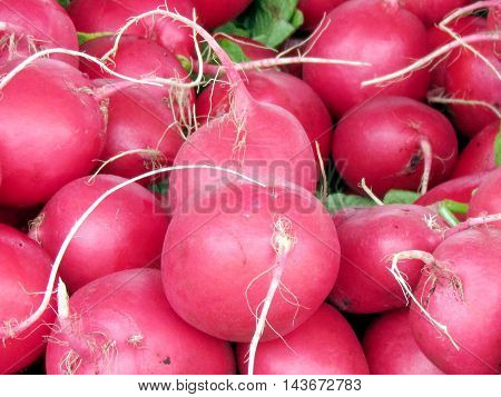 Red radishes on bazaar in St. Jacobs Village Ontario Canada
