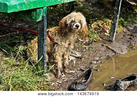 homeless puppies, soaked in the rain, hungry puppies