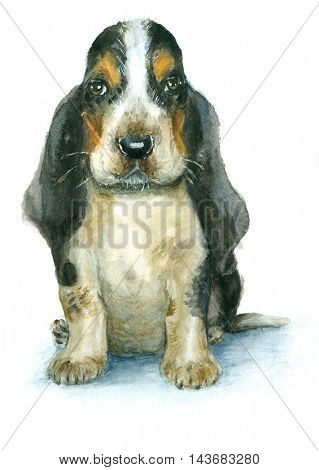 Watercolor basset hound puppy on white background
