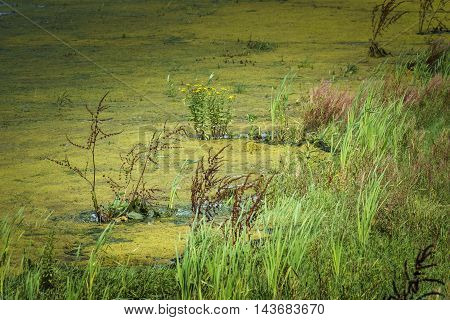 The Biesbosch national park wetlands and plant life