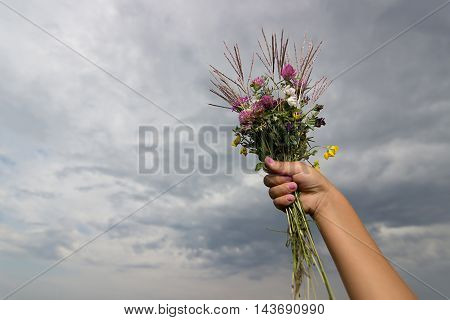 Children's hand holds a bouquet of wiled flowers on background of cloudy sky in summer. Children hand with wild flowers bouquet.