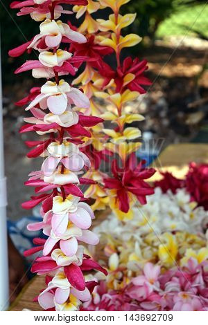 lei, tropical, white, petal, flower, blossom, bloom, necklace, welcome, pink, tradition, hawaiian, relax, plant, beauty, romantic, beautiful, romance, exotic, pretty, hawaii, relaxation, frangipani, plumeria