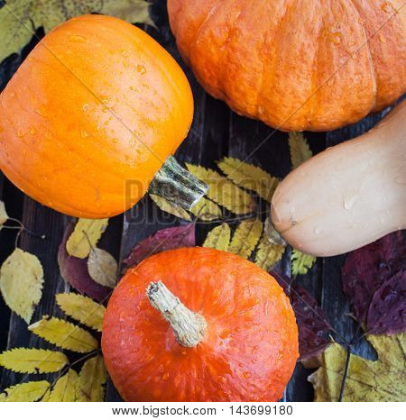 Fresh decorative autumn halloween pumpkins top view