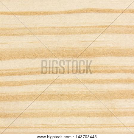 Wood background or texture: wood texture with natural patterns background