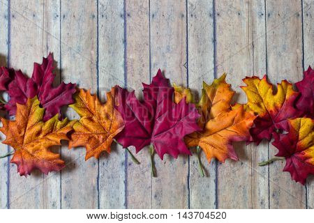 Fall and Autumn leaves lined up on a wood plank background. Leaves of yellow red orange and brown colors