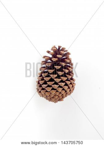 Brown dried pine cone on white background