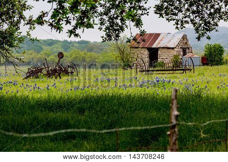 An Interesting Abandoned Old Rock Homestead Shed with old Farm Equipment in a Beautiful Field Loaded with the Famous Texas Bluebonnet (Lupinus texensis) Wildflowers.