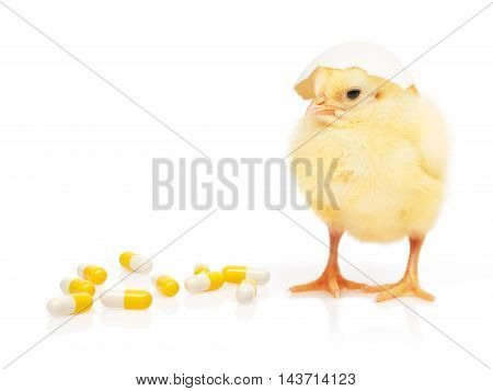 Chicken With Eggshell On Head Near Pile Of Capsules
