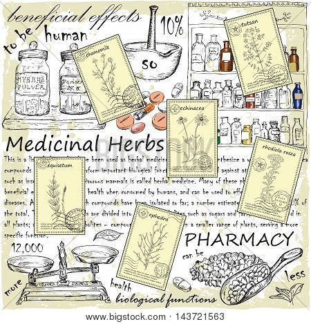 Hand drawn healing herbs postcards. Vintage design with medicinal herbs and pharmacy illustration. Set of vector sketches.