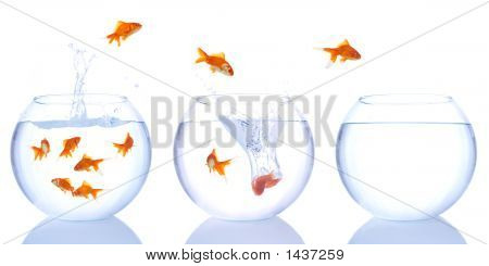 Goldfishes Escaping
