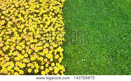 Play with the colors: green grass and yellow flowers.