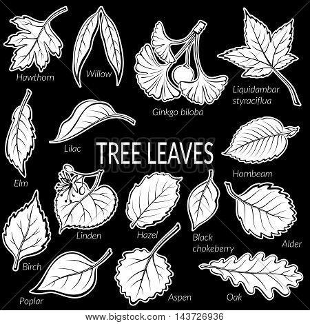 Set of Nature Pictograms, Tree Leaves, Oak, Willow, Liquidambar, Hawthorn, Poplar, Aspen, Hazel, Ginkgo Biloba, Elm, Birch, Alder, Linden, Hornbeam, Chokeberry and Lilac. White on Black. Vector