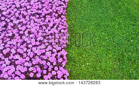 Play with the colors: green grass and purple flowers.