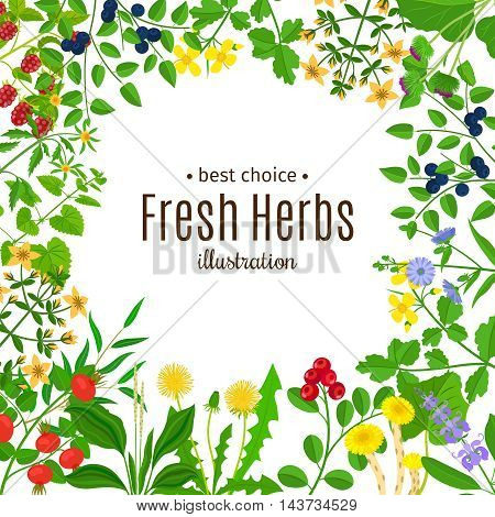 Medical herbs or botanical herb frame with text vector background