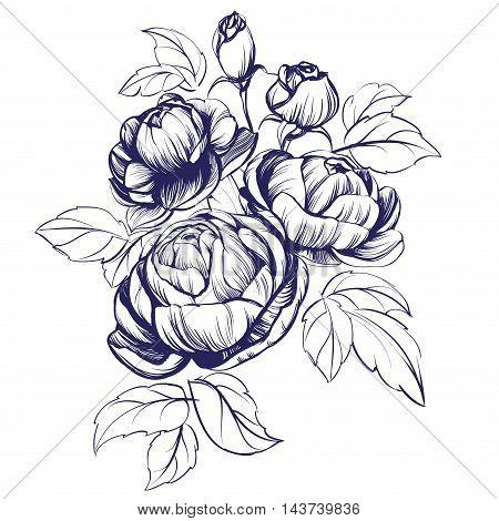 floral blooming rose branch vector illustration sketch