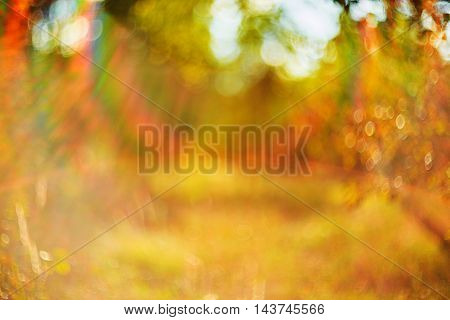 Photo of blurred field. Out of focus Summer Autumn sunset .