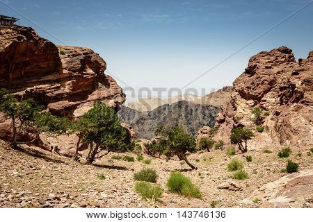 trees and black crags in old city Petra Jordan
