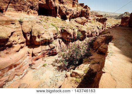 Road in old Nabataean city Petra Jordan