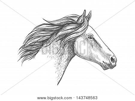 White horse pencil sketch portrait. Running mustang with waving mane on white background