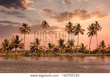 Kerala travel tourism background - Palms at Kerala backwaters. Allepey, Kerala, India on sunset. This is very typical image of backwaters.
