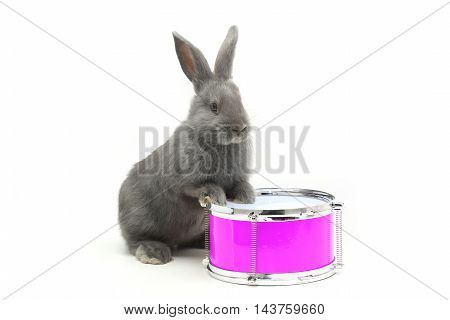 rabbit sitting on a drum on a white background