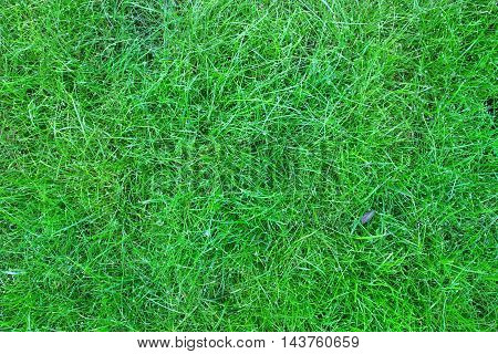 Background image of green grass in the summer